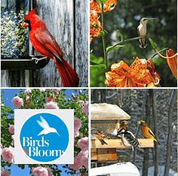BirdsandBlooms.com/Contest: Find the Hummingbird