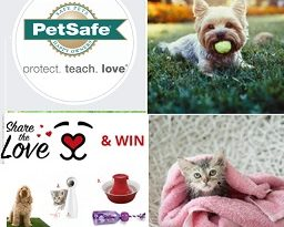 Petsafe Canada Contest: Win FroliCat BOLT Automatic Laser Light